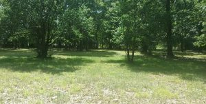 conroe tx selling land